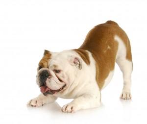 Pet Language Interpretation