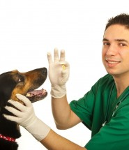 Administering Pet Medication
