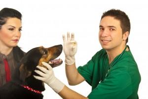 Administering Pet Medication