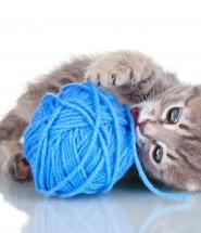 Cat chewing yarn.